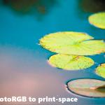 ProPhotoRGBLillyPadsToPrintSpace